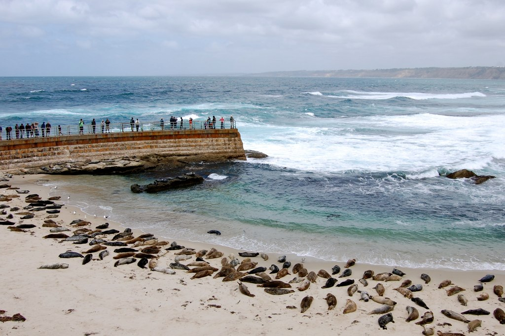 The La Jolla Town Council Task Force On California Sea Lions Has Requested That City Of San Go Declare Cove A Public Health Hazard Due To